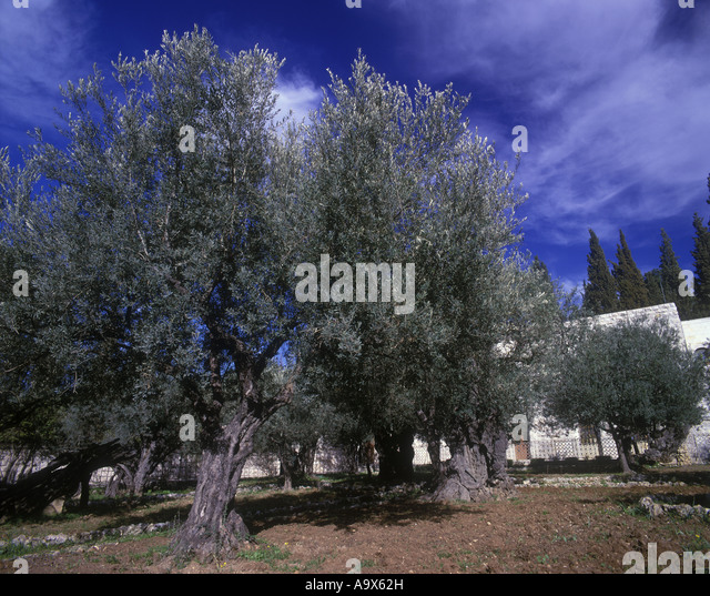Garden Gethsemane Stock Photos Garden Gethsemane Stock Images Alamy