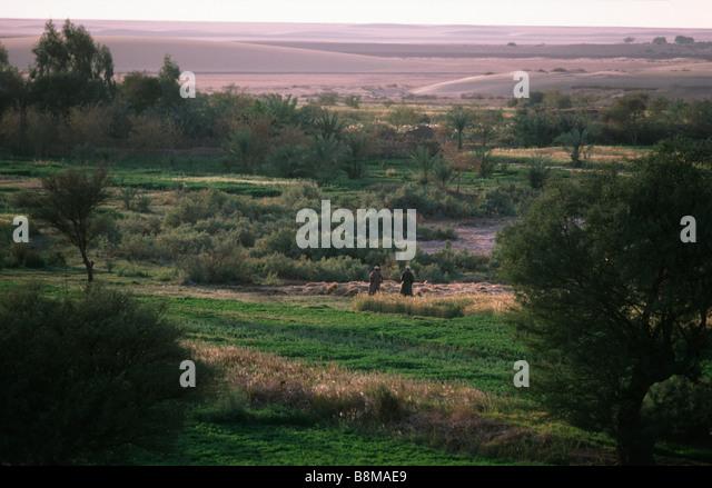 Kharga Oasis, Egypt - Stock Image
