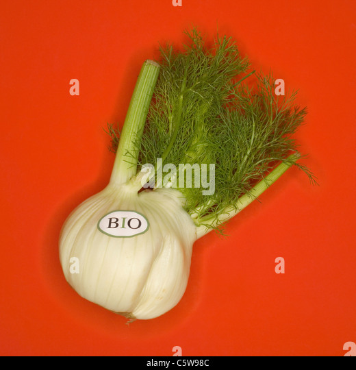 Organic Fennel, elevated view - Stock Image