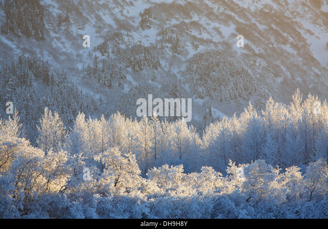 Winter in the Chugach National Forest, Alaska. - Stock Image