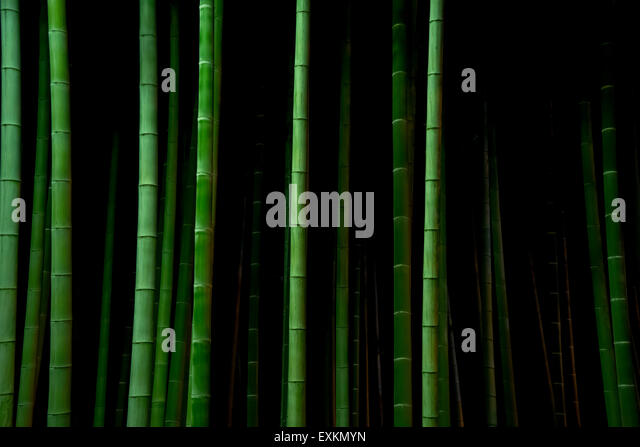 Bamboo trees at night, Tokyo, Japan - Stock Image