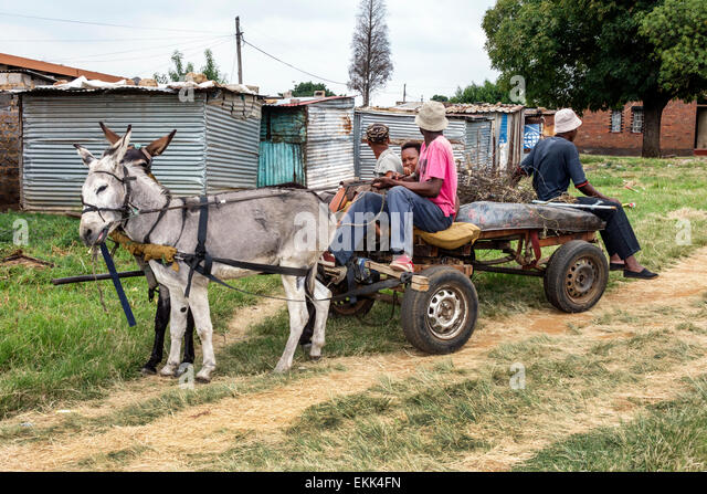 South Africa African Johannesburg Soweto donkey-drawn ass cart - Stock Image