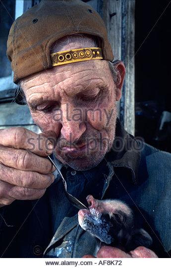 Delaware Viola farmer runt piglet spoon feeding - Stock Image