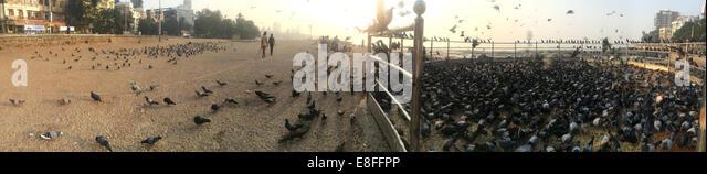 India, Mumbai, Charity bird feeding station on Marine Drive - Stock Image