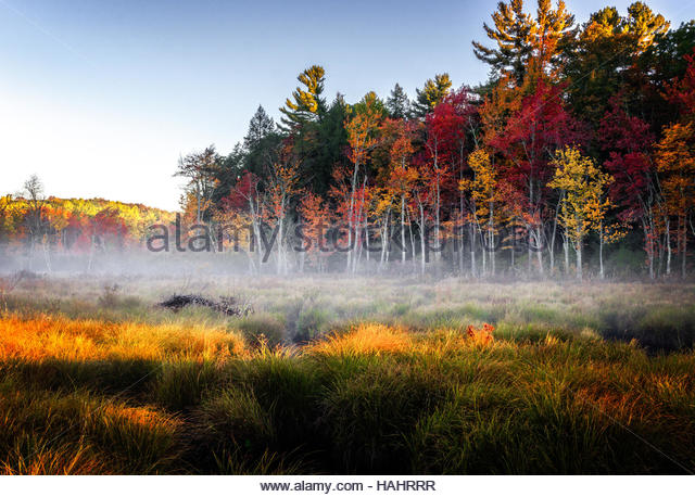 Humble Home on the Marsh - Stock Image