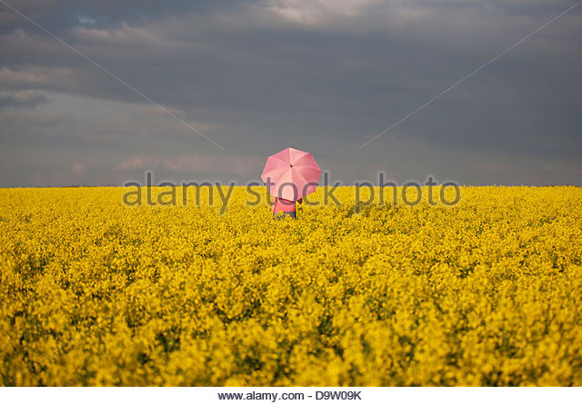 A young woman standing in a rape seed field holding a pink umbrella - Stock Image