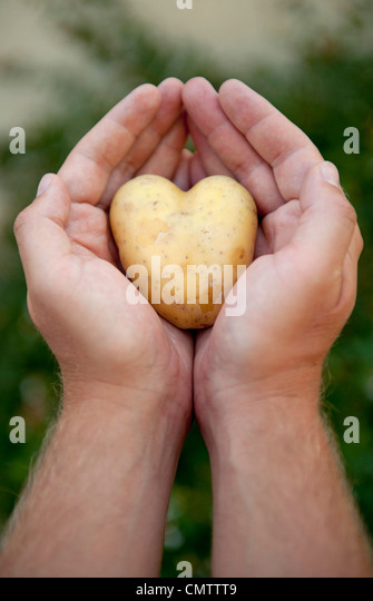 Close-up of human hand holding potato - Stock Image