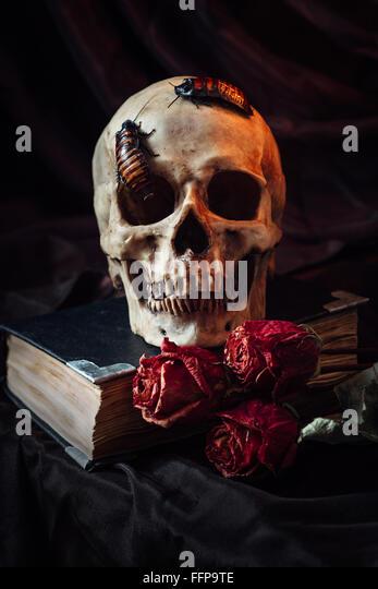 Still life with human skull - Stock Image