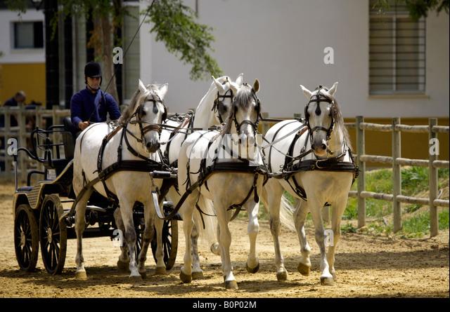 Horse drawn carriage at Yeguada de la Cartuja stud, Hierro del Bocado, Jerez de la Frontera, Andalucia, Spain - Stock Image