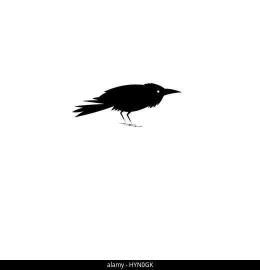 raven drawing stock photos  u0026 raven drawing stock images