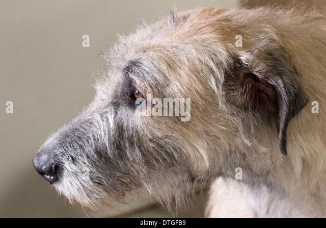 Dog Breeders In Lindsay Ontario