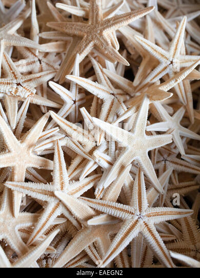 detail of many starfish - Stock Image