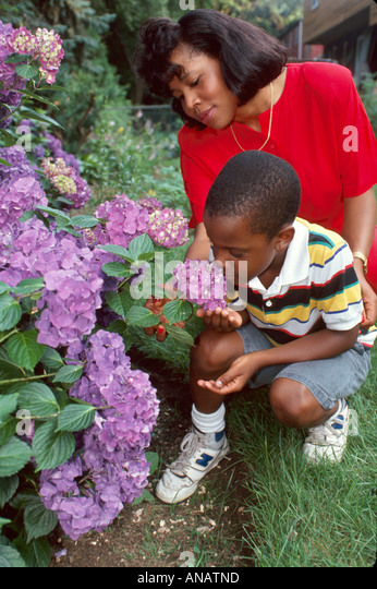 New Jersey Teaneck Black mother son flowers yard nature growing family home - Stock Image