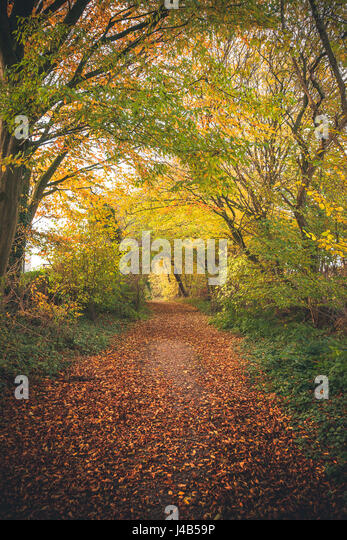 Forest trail surrounded by colorful trees in the fall with golden leaves covering the path in an fairytale environment - Stock Image