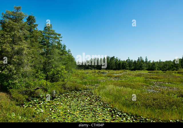 Swampy bogs, Pine Barrens, New Jersey, USA - Stock-Bilder