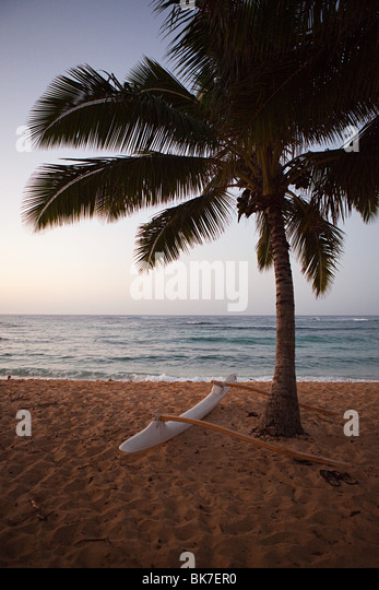 Outrigger canoe and palm tree on hawaiian beach - Stock Image