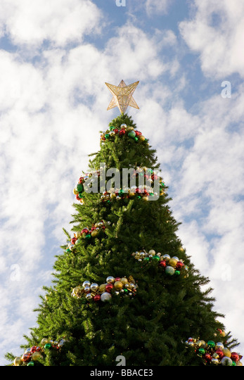 A large decorated Christmas tree, outdoors - Stock-Bilder