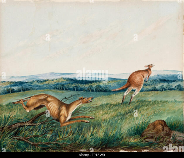 Adam Gustavus Ball - Dog chasing a kangaroo - Stock Image