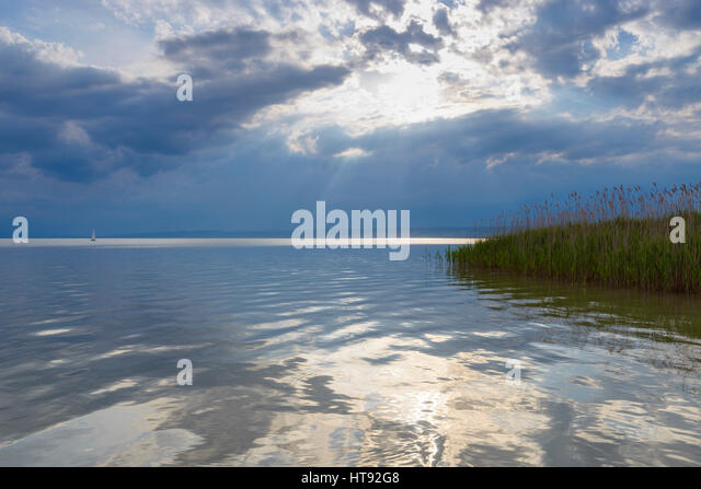 Reeds at Lake Neusiedl with Sun at Weiden, Burgenland, Austria - Stock Image