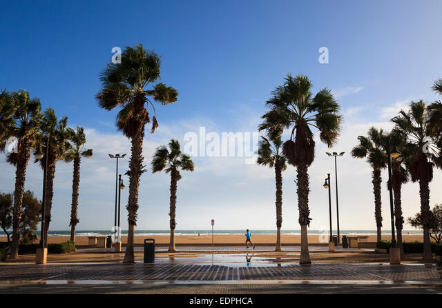Solitary jogger on the promenade of Valencia in the winter sunshine with windswept palm trees - Stock Image