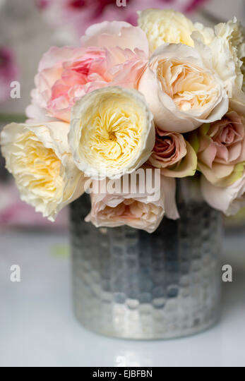 Bouquet of David Austin English rose Patience, with other English and garden roses, photographed in Paris, France - Stock Image