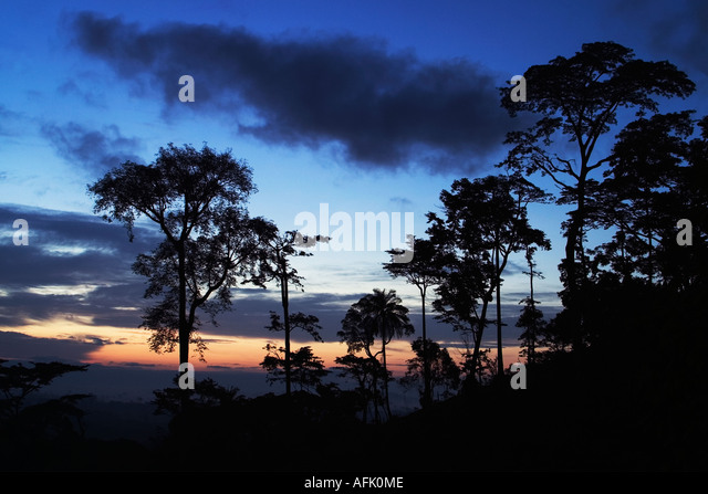 Dawn over African Tropical Rainforest with mist clearing, Ghana, West Africa - Stock-Bilder