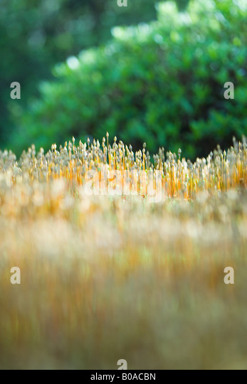 New vegetation growing, close-up - Stock Image