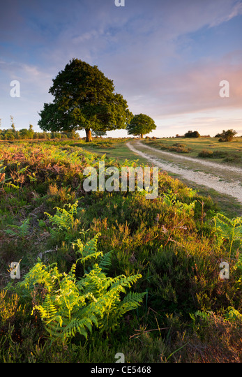 Trees and bracken on the New Forest heathland in the Springtime, Hampshire, England. Spring (May) 2011. - Stock Image