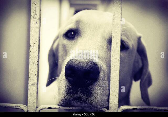Sad dog. - Stock Image