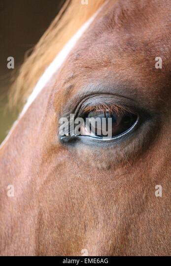 Horse eyes close up