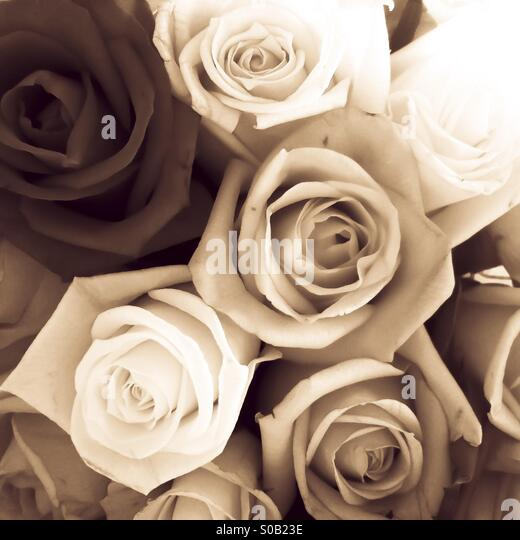 Monochrome roses - Stock Image