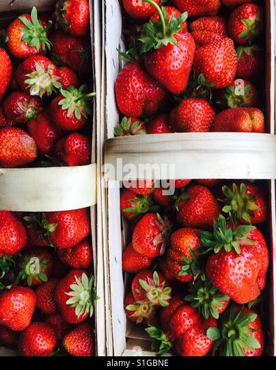 Freshly picked strawberries in baskets. - Stock-Bilder