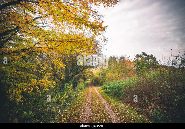 Landscape with a forest trail in the fall surrounded by colorful trees in autumn colors and leaves covering the - Stock Image