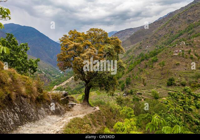 Landscape View Mountains Hiking Himalayas.Beautiful End Summer Season Background.Horizontal Photo.Green Three Cloudy - Stock Image