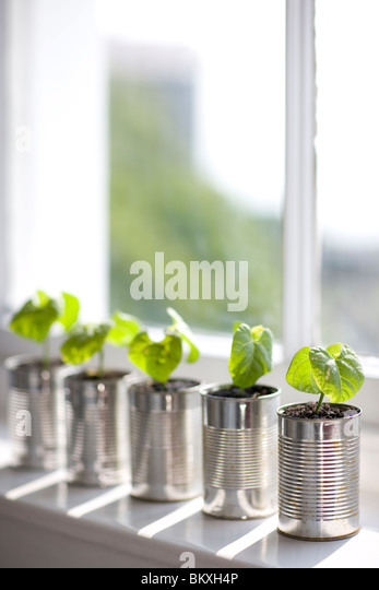 Recyclable tin cans with seedlings on a window sill - Stock Image