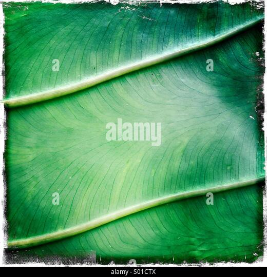 Tropical Garden detail - Stock Image