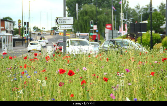 Traffic navigates a roundabout  brimming with sown wildflowers in the Parkgate area of , Yorkshire England UK - Stock Image