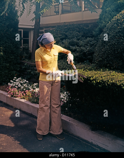 1970s WOMAN USING GARDEN CLIPPERS TRIMMING BOXWOOD HEDGE WEARING BELLBOTTOMS - Stock Image