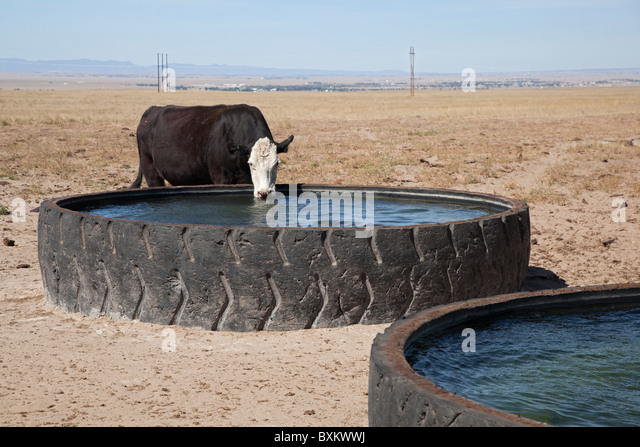 Recycled Industrial Tires Provide Water on Cattle Ranch - Stock Image