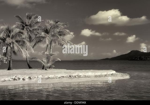 Beach with palm trees. bora Bora. French Polynesia. - Stock Image