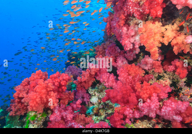 Colorful Fish Reef Stock Photos & Colorful Fish Reef Stock ...