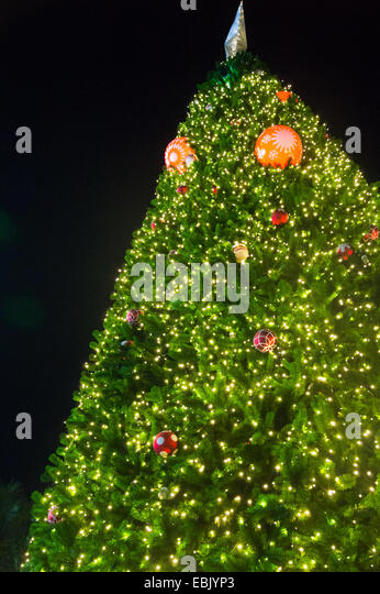 Christmas tree in upper view - Stock Image