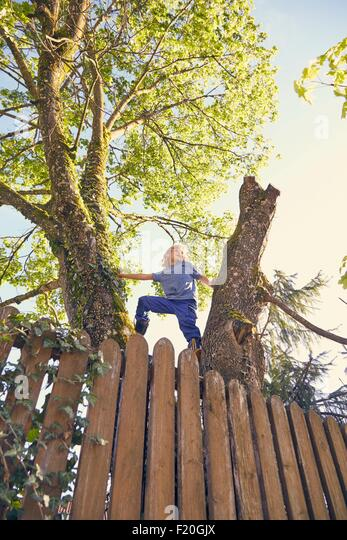 Young boy climbing tree, low angle view - Stock Image