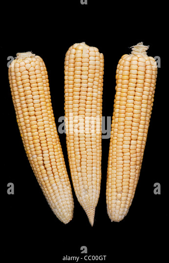 Sweetcorn cob. Corn on the cob. Maize on black background - Stock Image