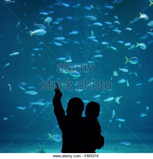 Silhouette Father And Child At Aquarium - Stock-Bilder