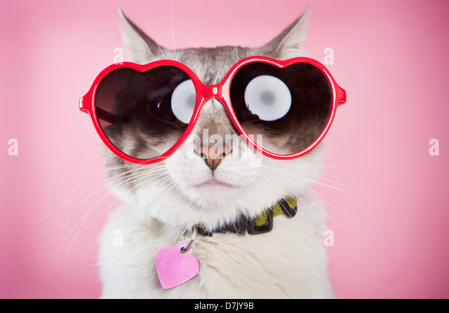 Valentine cat posing with red love sunglasses against pink  background - Stock-Bilder