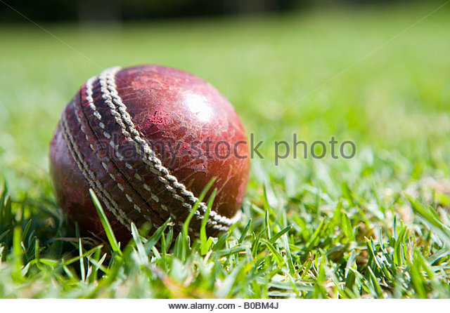 Cricket ball on grass, close-up - Stock Image
