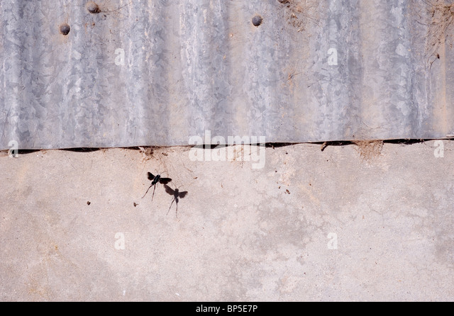 Metal, Concrete and Flying Insect - Stock-Bilder