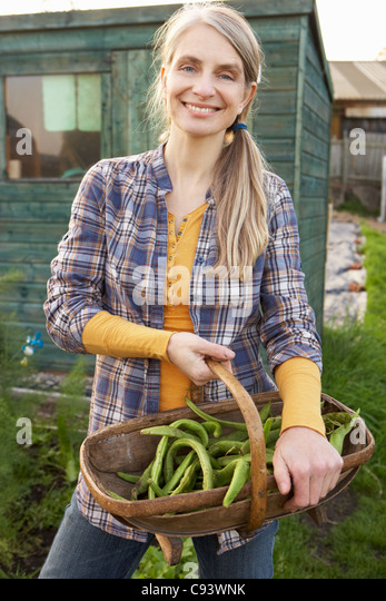 Woman working on allotment - Stock-Bilder