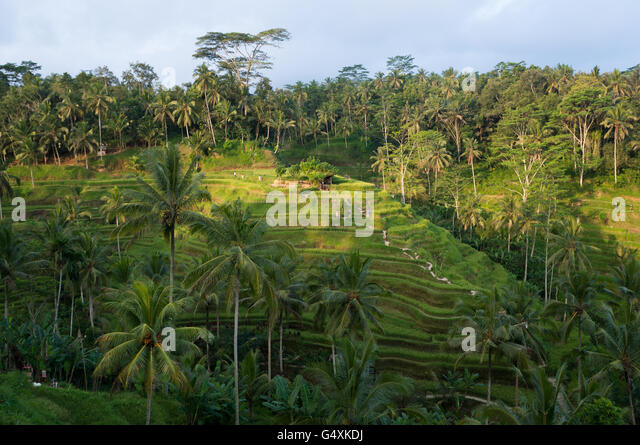 Irregation stock photos irregation stock images alamy for Tegalalang rice terrace ubud